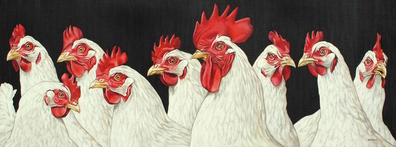 Acht kippen en 1 haan