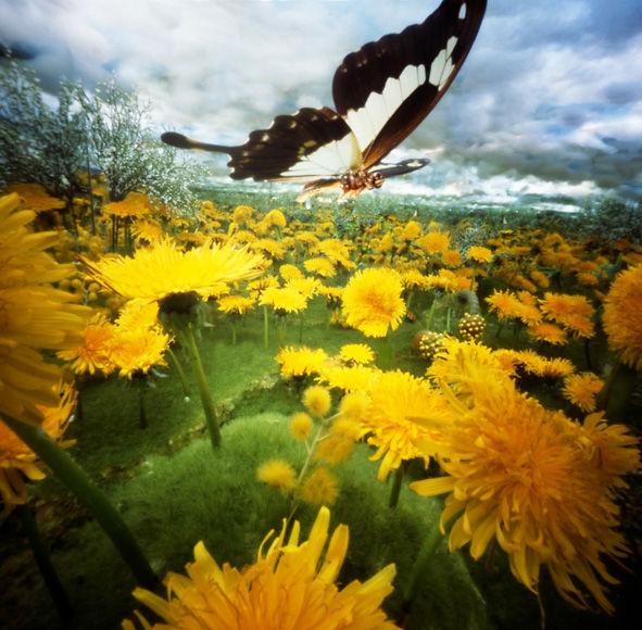 Zonnevlinder