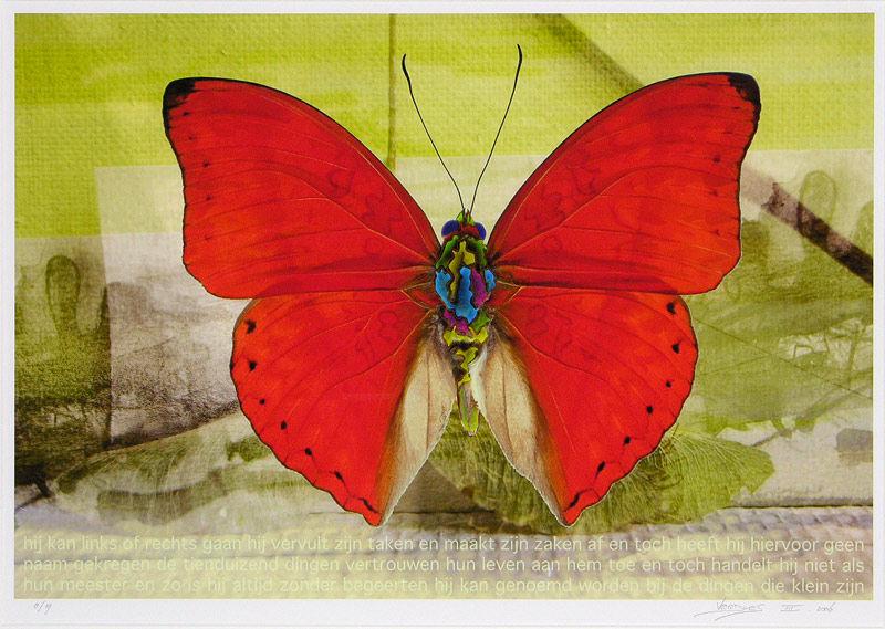 Vlinder III