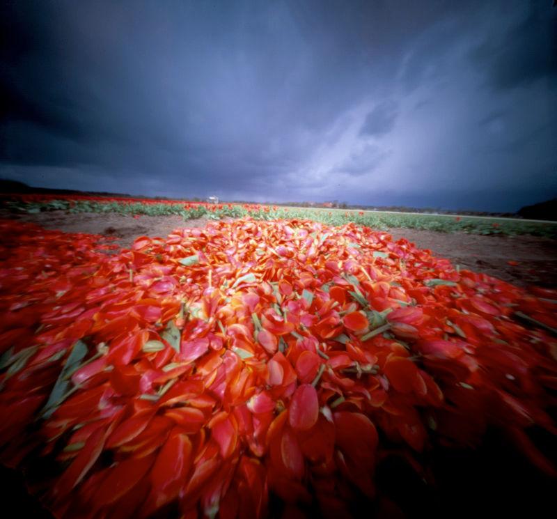 Tulpenkopjes