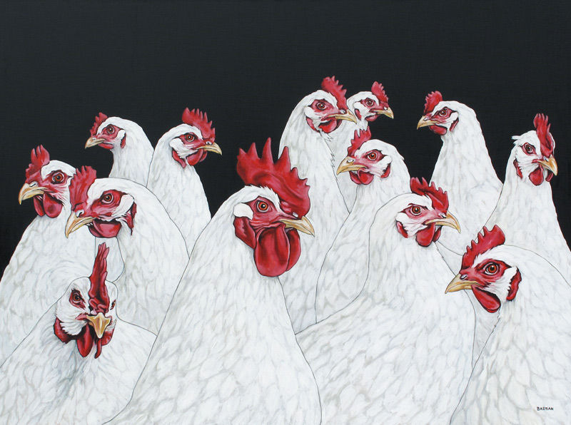 Twaalf kippen en een haan