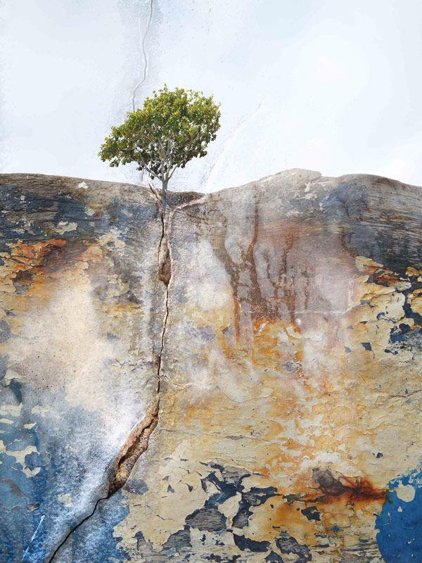 Solitary tree (8)