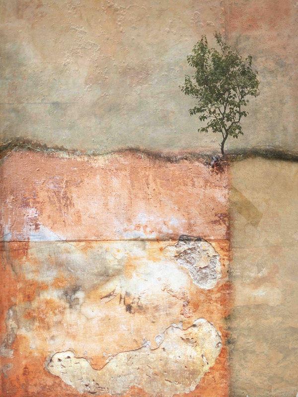 Solitary tree (12)