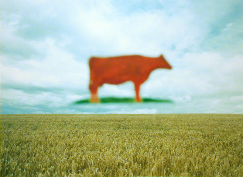 Koe in de lucht